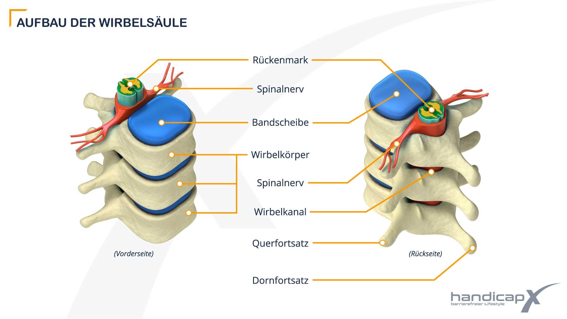 Grafik zeigt den Aufbau der Wirbelsäule